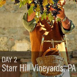 Starr Hill Vineyard & Winery, PA